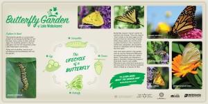 LakeWabukayne Butterfly Garden