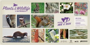LakeWabukayne plants&WildLife