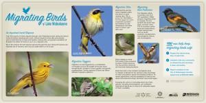 LakeWabukayne.Birds